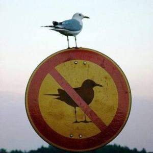 Não é obrigatório!